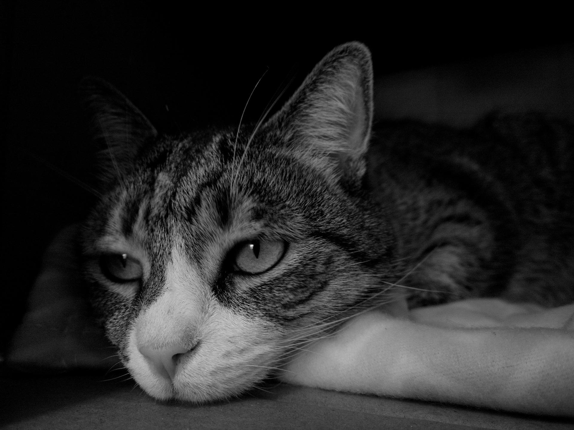 cat-1429231_1920